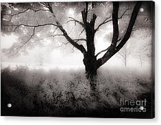 Acrylic Print featuring the photograph The Ancient Tree by Craig J Satterlee