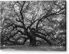 The Angel Oak Tree Bw  Acrylic Print