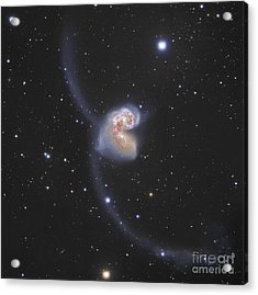 The Antennae Galaxies Acrylic Print by Robert Gendler