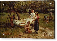 The Apple Gatherers Acrylic Print