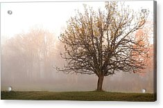 The Apple Tree Acrylic Print