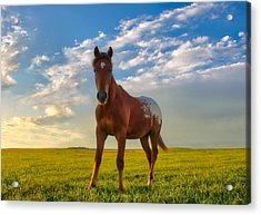 The Appy Acrylic Print