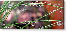 The Art Of Dew Drops Acrylic Print by Irma BACKELANT GALLERIES
