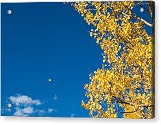 The Aspen Leaf Acrylic Print