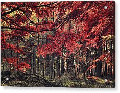 The Autumn Colors Acrylic Print