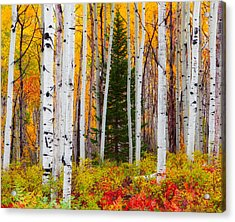 The Autumn Forest Acrylic Print