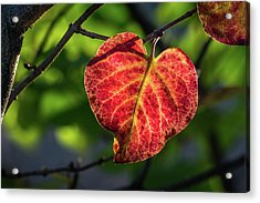 Acrylic Print featuring the photograph The Autumn Heart by Bill Pevlor