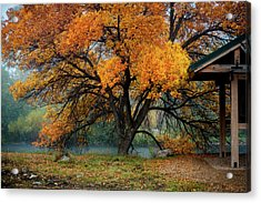 The Autumn Tree Acrylic Print