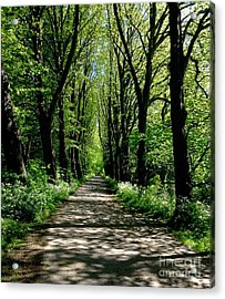The Avenue Of Limes At Mill Park 3 Acrylic Print