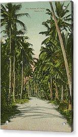 Acrylic Print featuring the photograph The Avenue Of Palms Guam Li by eGuam Photo
