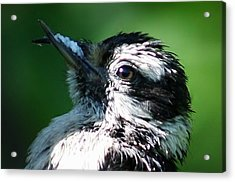 The Baby With Suet Acrylic Print by Bonnie Brann