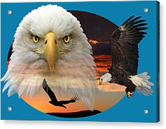Acrylic Print featuring the photograph The Bald Eagle 2 by Shane Bechler