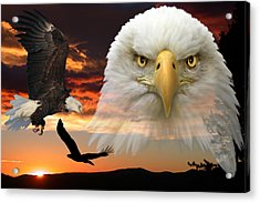 Acrylic Print featuring the photograph The Bald Eagle by Shane Bechler