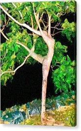 The Ballerina Tree - Da Acrylic Print by Leonardo Digenio