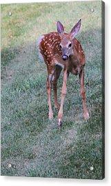 The Bambi Stance Acrylic Print by Karol Livote