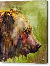 The Bear Acrylic Print by P Maure Bausch
