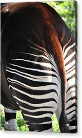 The Beautiful Okapi 03 Acrylic Print