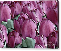 The Beauty And Depth Of A Bed Of Tulips Acrylic Print