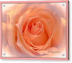 The  Beauty Of A Rose  Copyright Mary Lee Parker 17,  Acrylic Print by MaryLee Parker