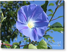 The Beauty Of Blue  Acrylic Print
