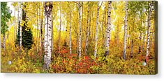 Acrylic Print featuring the photograph The Beauty Of The Autumn Forest by Tim Reaves