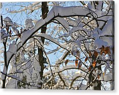 The Beauty Of Winter Acrylic Print