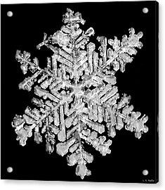 The Beauty Of Winter Acrylic Print