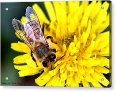 The Bee Acrylic Print by Karen Scovill