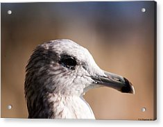 The Best Side Of The Gull Acrylic Print
