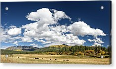 The Big Picture Acrylic Print by Cathy Neth