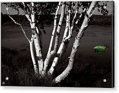 The Birch And The Green Dingy Acrylic Print