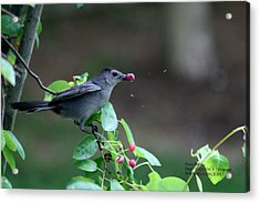 Acrylic Print featuring the photograph The Bird  by Paul SEQUENCE Ferguson             sequence dot net