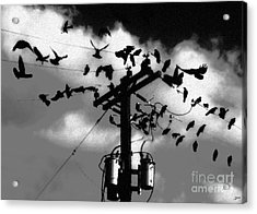 The Birds Acrylic Print by David Lee Thompson