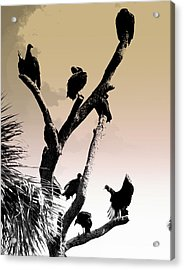 Acrylic Print featuring the photograph The Birds by Laura DAddona