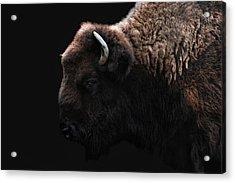 The Bison Acrylic Print by Joachim G Pinkawa