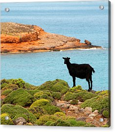 The Black Cheep Acrylic Print by Manolis Tsantakis