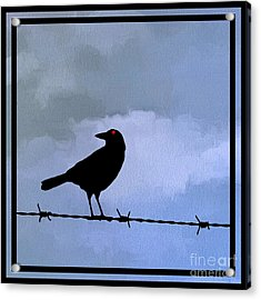 The Black Crow Knows Blue Acrylic Print by Edward Fielding