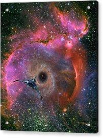 The Black Hole Beckons Acrylic Print by David Jackson
