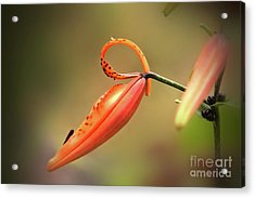 The Blooming Acrylic Print