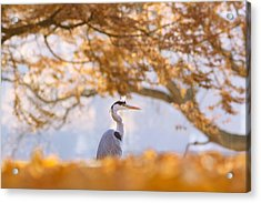 The Blue Heron And The Red Tree Acrylic Print by Roeselien Raimond