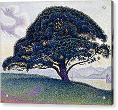 The Bonaventure Pine  Acrylic Print by Paul Signac