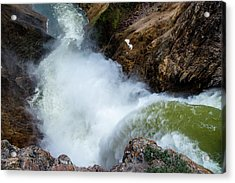 The Brink Of The Lower Falls Of The Yellowstone River Acrylic Print