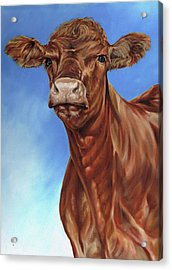 The Brown Cow Acrylic Print by Richard Mountford