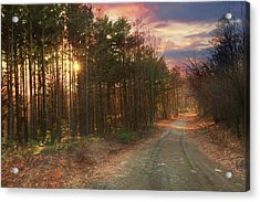 Acrylic Print featuring the photograph The Brown Path Before Me by Lori Deiter