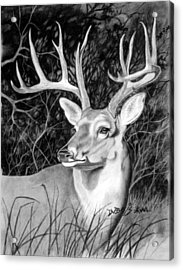 The Buck Acrylic Print