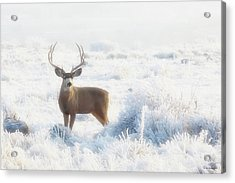The Buck Stops Here Acrylic Print