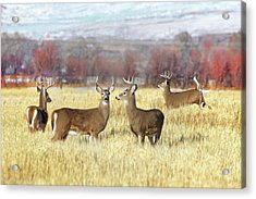 Acrylic Print featuring the photograph The Bucks Stop Here White-tail Deer  by Jennie Marie Schell