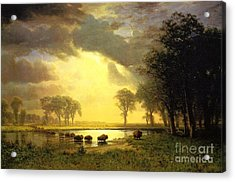 The Buffalo Trail Acrylic Print