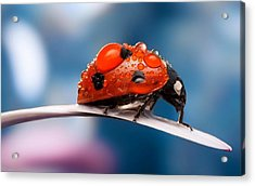 The Bug Acrylic Print