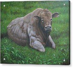 The Bull Acrylic Print by Stephen Howell